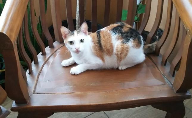 Kucing kampung rumahan