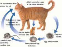 Penyebab Kucing Cacingan