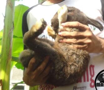 memegang kelinci