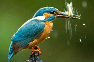 Download Suara Burung Tengkek Udang Mp3